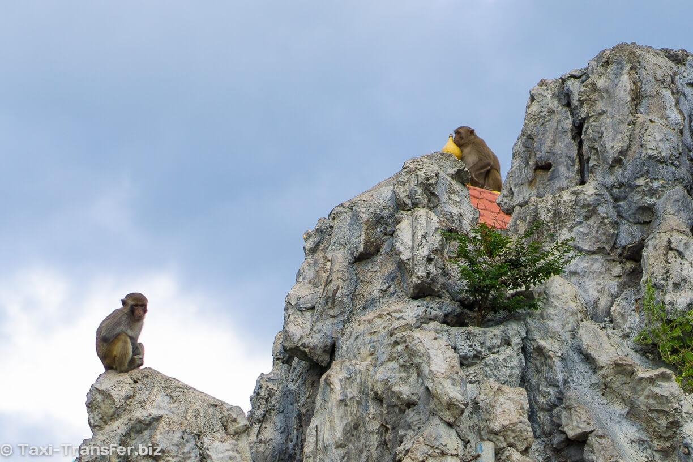 15. Обезьянки на горе