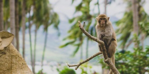 Monkey Island near Nha Trang city – phototour