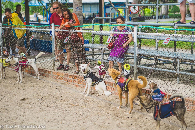 24. Running dogs