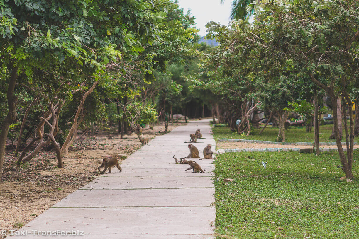 Alley of Monkeys