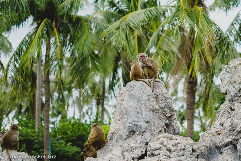 13. Monkey Island Nha Trang