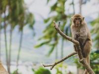 Остров обезьян недалеко от Нячанга